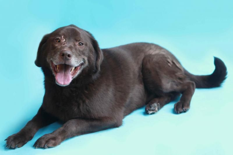 Adopt Coracle On Petfinder Lab Dogs Animal Photography Dogs Lab Puppies