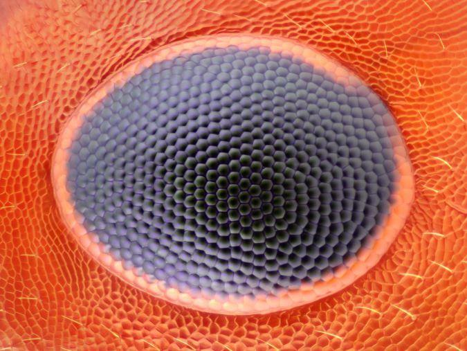 Ojo Hormiga Matemáticas Y Geometría En La Naturaleza Pinterest
