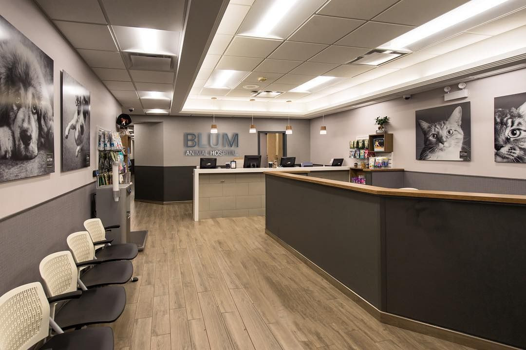 Animal Jobs Near Me 2020 Dentist Office Design Dental Office Design Office Interior Design