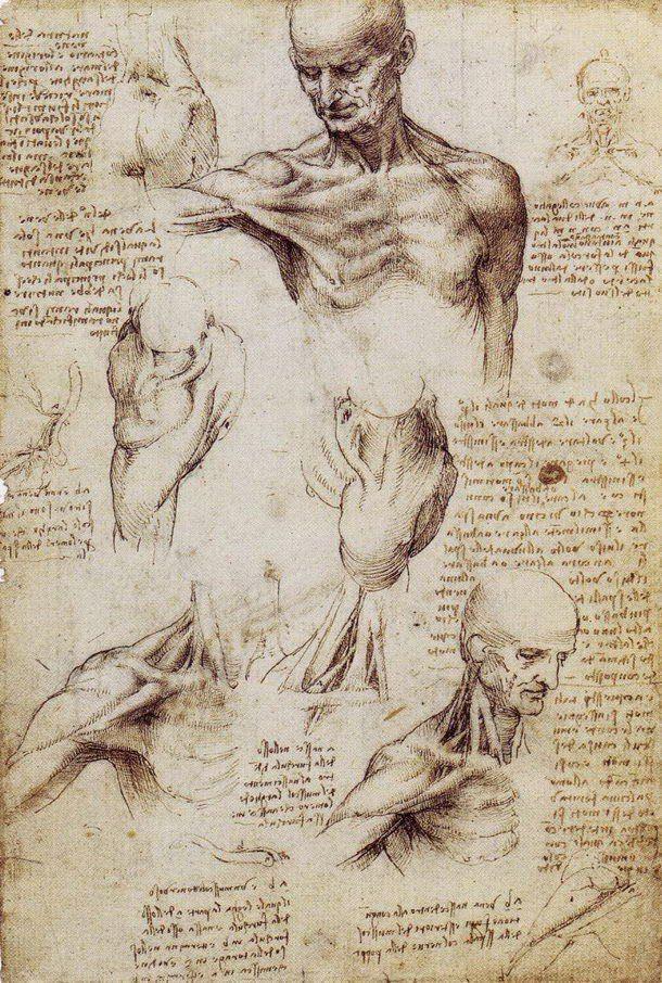 anatomia da vinci arte ciencia | Cultura Colectiva | Cultura ...