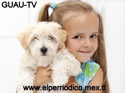 Enfermedades comunes transmitidas a los humanos. La  nota perrona con Sam Bernardo en  http://elperriodico.mex.tl