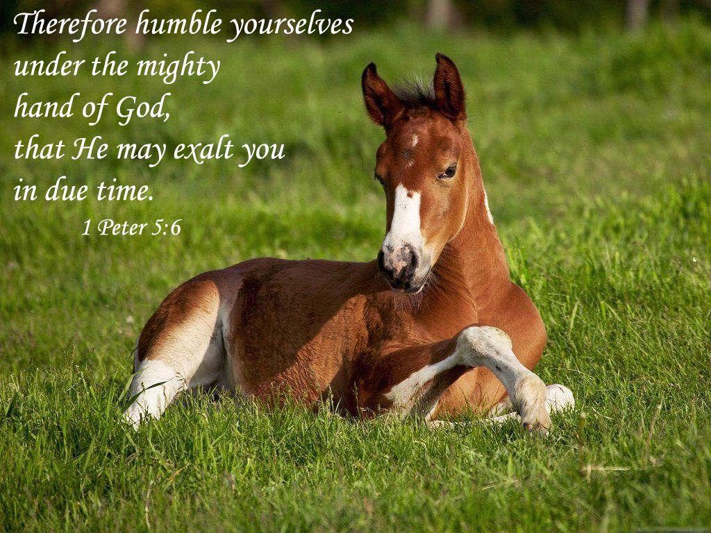 Must see Wallpaper Horse Bible Verse - 8f8e17d98b54877d297411c1750a0e2b  Image_366320.jpg