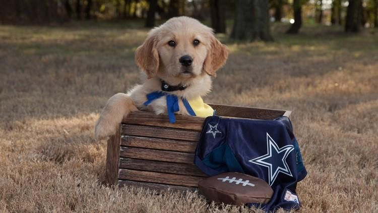 Dak The Puppy May Seem Adorable Right Now But His Ultimate