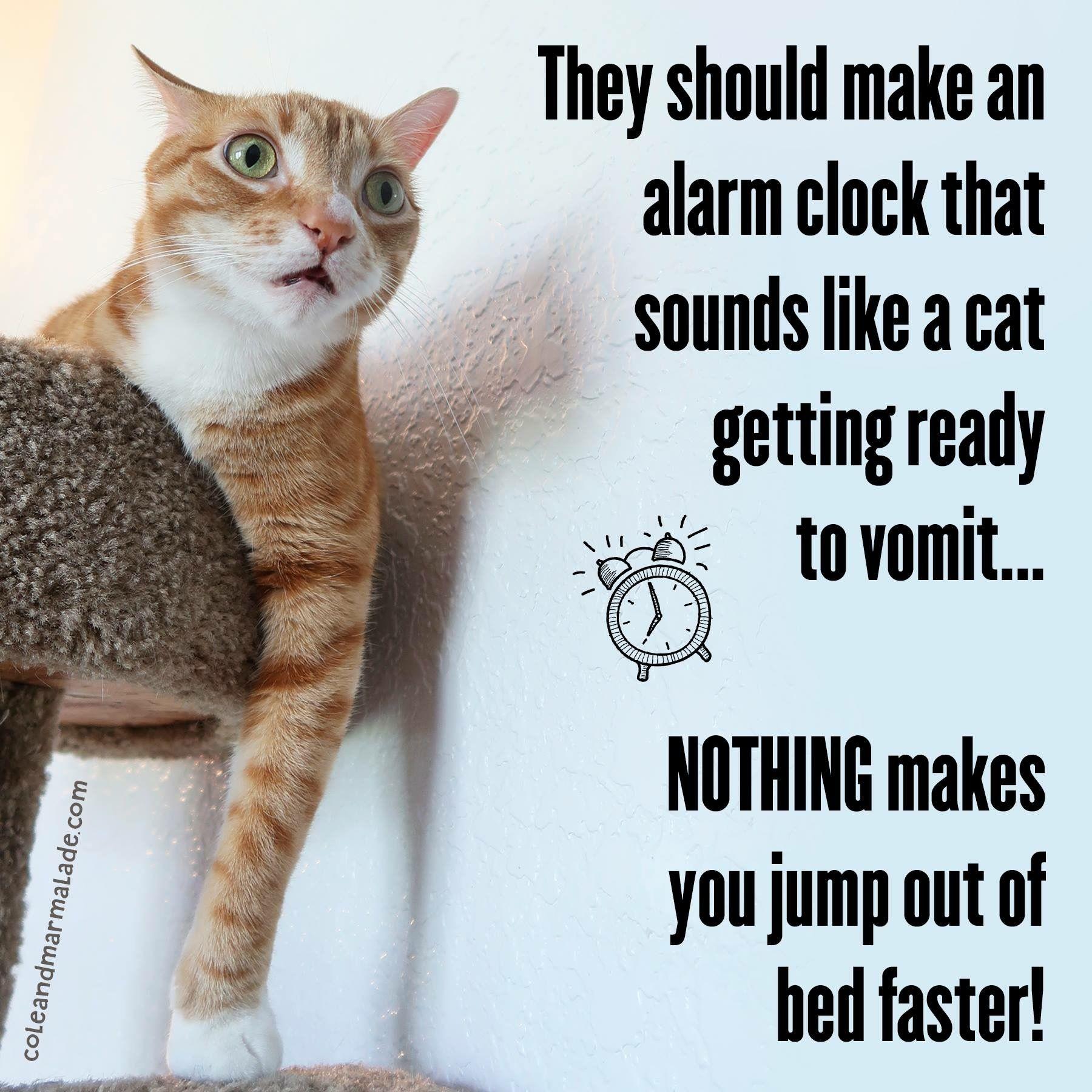 Cat Barf Alarm Clock Cat Feline Funny Cute Cat Memes Funny Cats Cat Memes