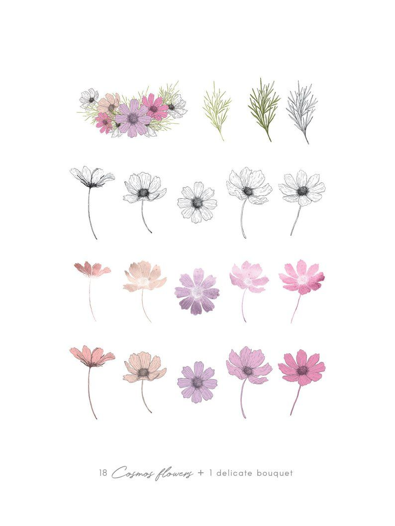 Cosmos Flower Clipart Pink Watercolor Illustration Line Art Etsy Flower Line Drawings Flower Clipart Watercolor Illustration
