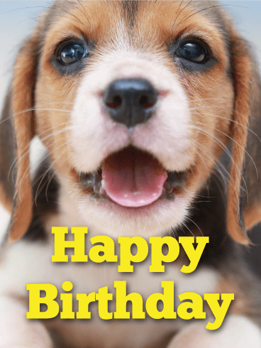 From Happy Birthday Beagle Wwwhealthgainstore