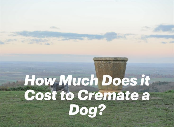 17++ Animal cremation services near me images