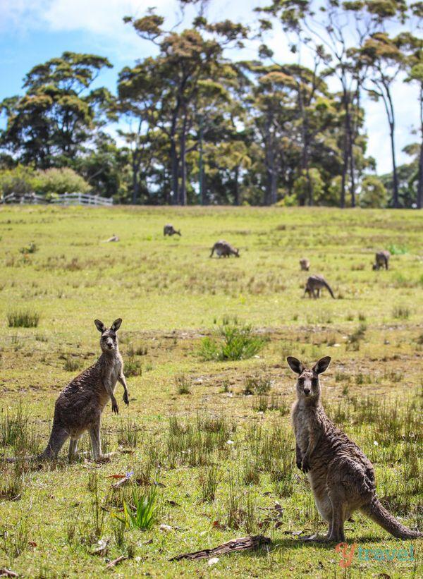 Where to see koalas and kangaroos? - Fodor's Travel Talk ...