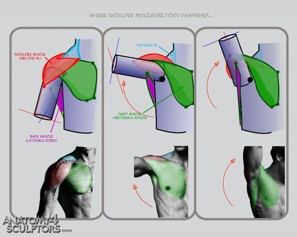 那么多种骨头和肌肉,学美术时是怎么记人体结构的?(多图)