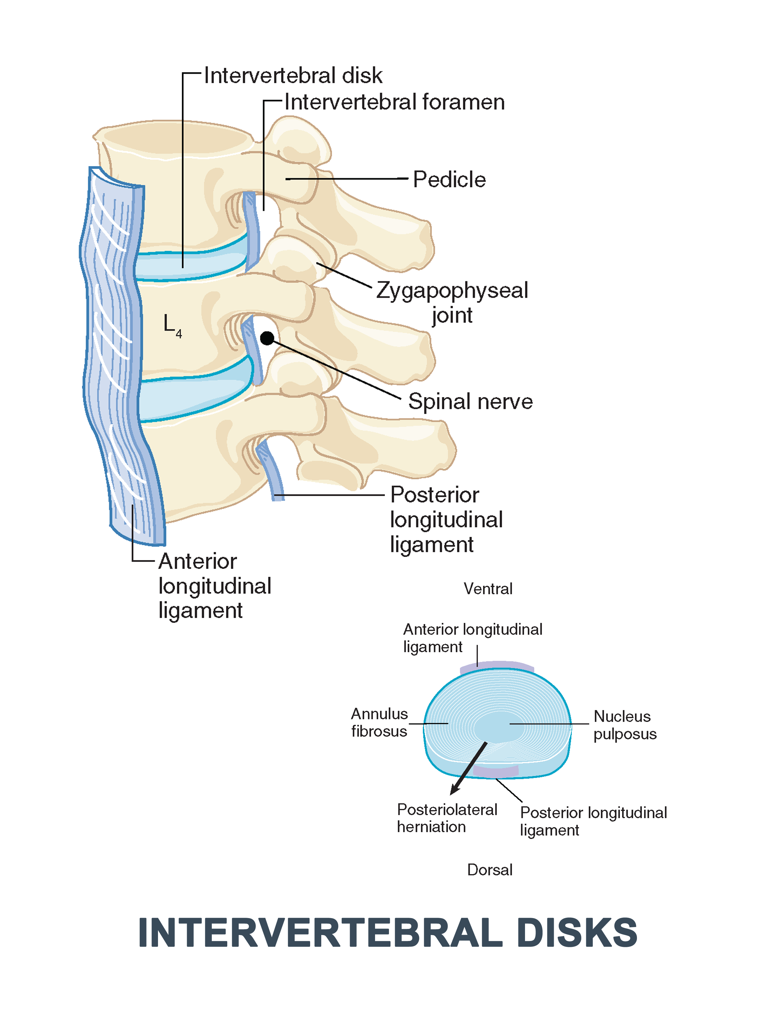 Clinical Anatomy of the Spine, Spinal Cord, and ANS, 3e 3rd Edition