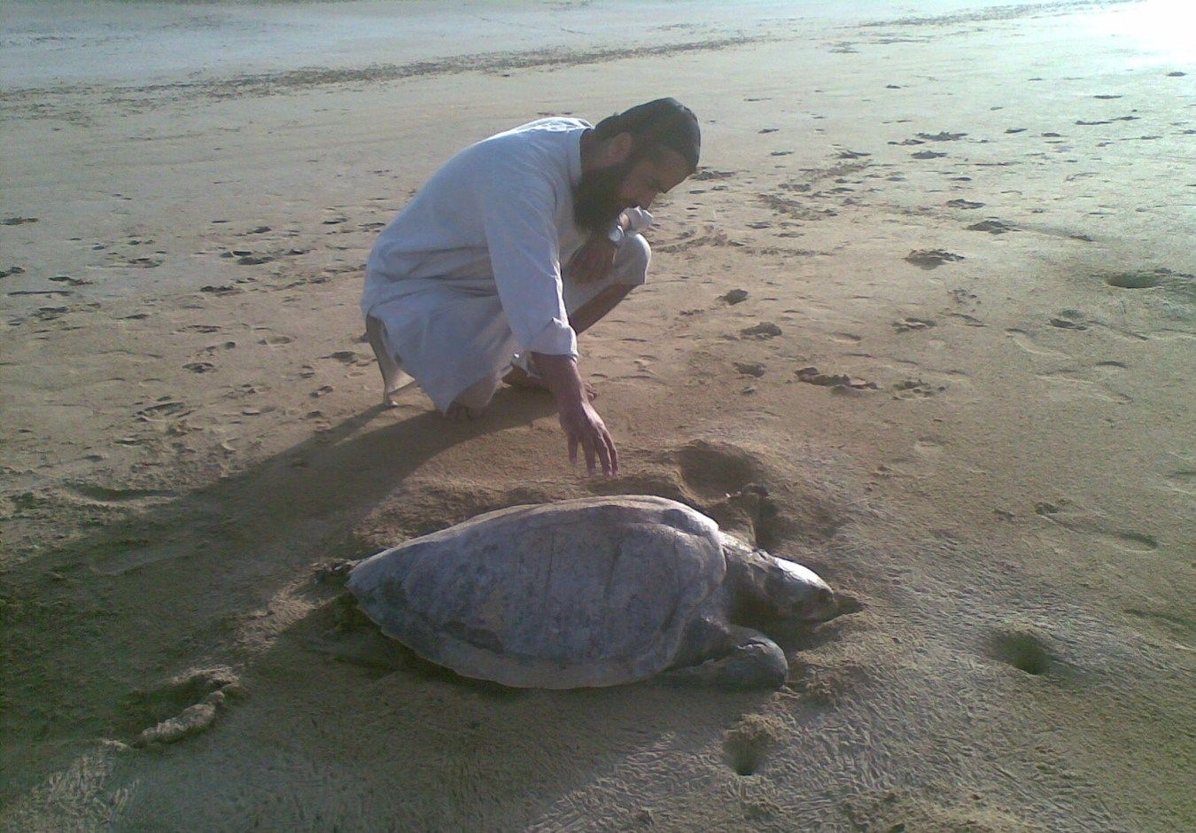 Turtle Species in Pakistan Face Extinction Threat (Latest