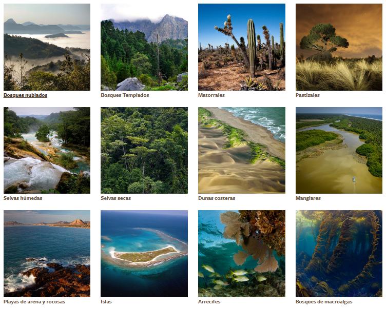 Diversidad de ecosistemas - Búsqueda de Google en 2020 | Diversidad de  ecosistemas, Ecosistemas, Búsqueda de google