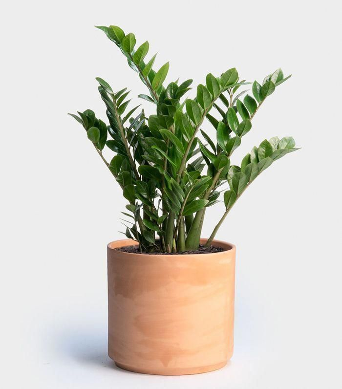 Is Your Home North Facing Or Doesn T Get A Ton Of Natural Light These Indoor Plants For Low Are Exactly What You Need Indoorgarden