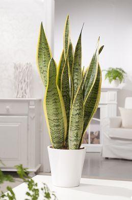 12 Plantes D Interieur Difficiles A Tuer Pour Purifier L Air De
