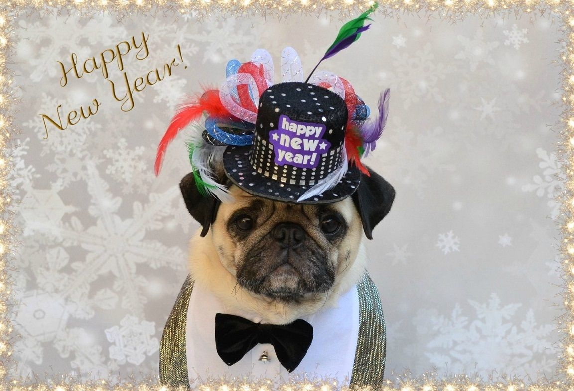 Happy New Year Cute Dog Pictures Pug Love Cute Funny Dogs