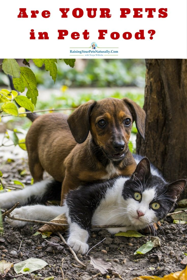 Healthy And Not Healthy Pet Food Ingredients Introducing Puppy