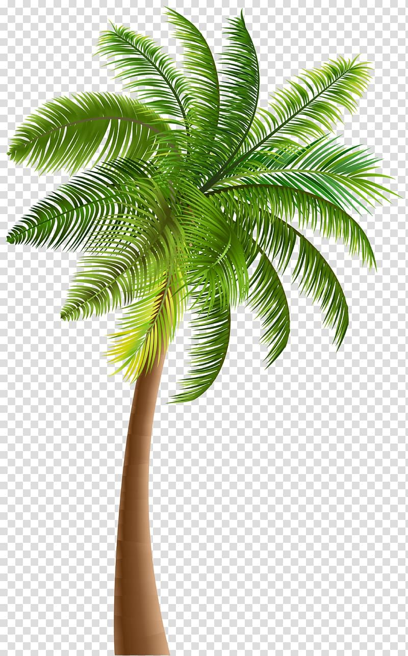 Green Coconut Tree Illustration Arecaceae Tree Coconut Palm Tree Transparent Background Png Clipart Palm Tree Clip Art Palm Tree Wall Art Cartoon Palm Tree