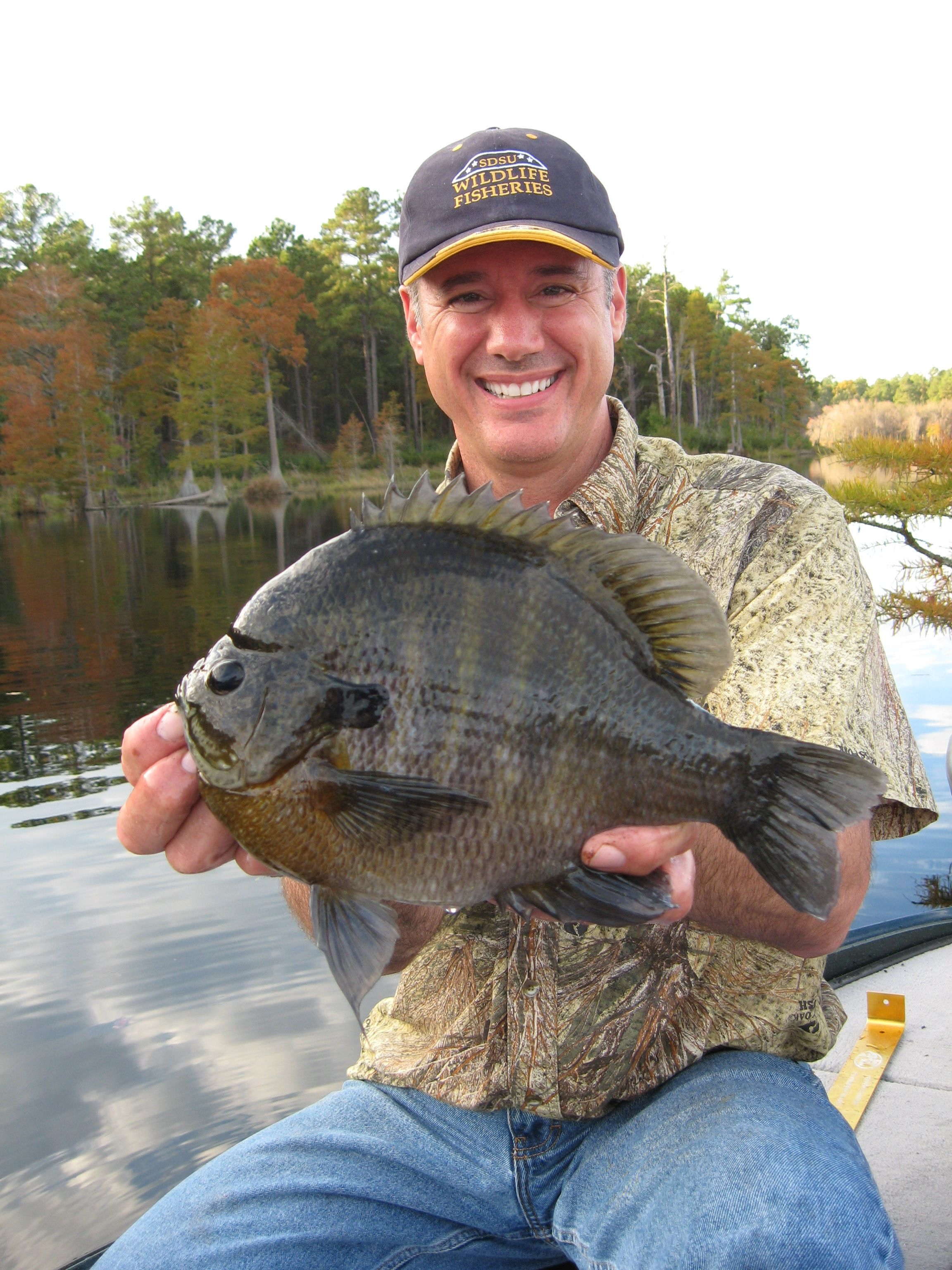 Bluegill fishing what a hog totally random for Fly fishing for bluegill