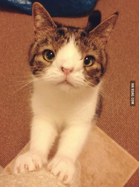 Cat with down syndrome
