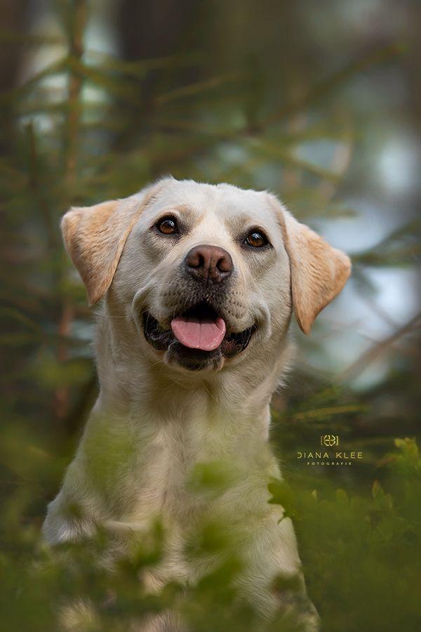 Hundefotografie Im Markischen Kreis Und Nrw Diana Klee Fotografie Hundefotografie Hundefotos Pferdefotografie