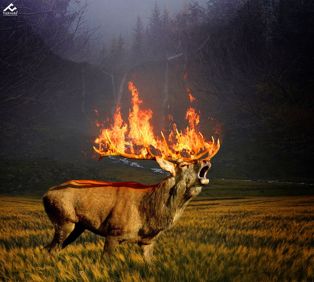 Amazon Rainforest Deer Poster Nature Images Nature Conservation