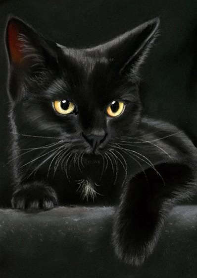 If only in real life they were this beautiful and elegant. However it just depends on how you see them on the inside, because they are most beautiful on the inside. #blackcat
