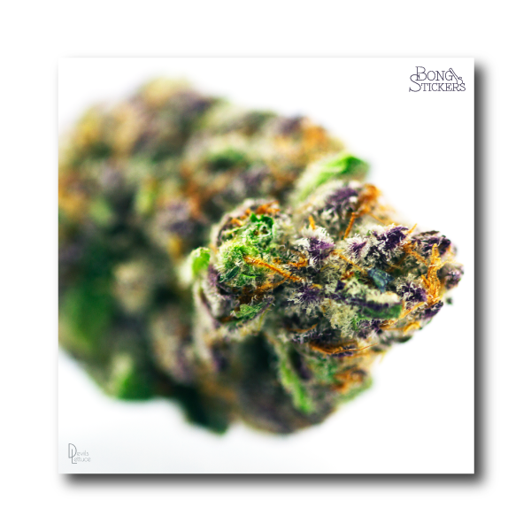 Dosi Dos Weed Sticker - Marijuana Sticker 0019