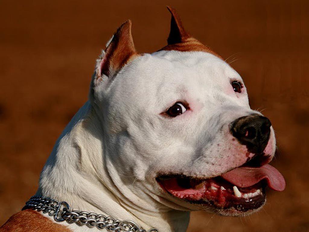 сосудистые собака людоед порода картинки плохой