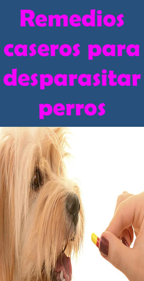 remedios caseros para desparasitar a los perros