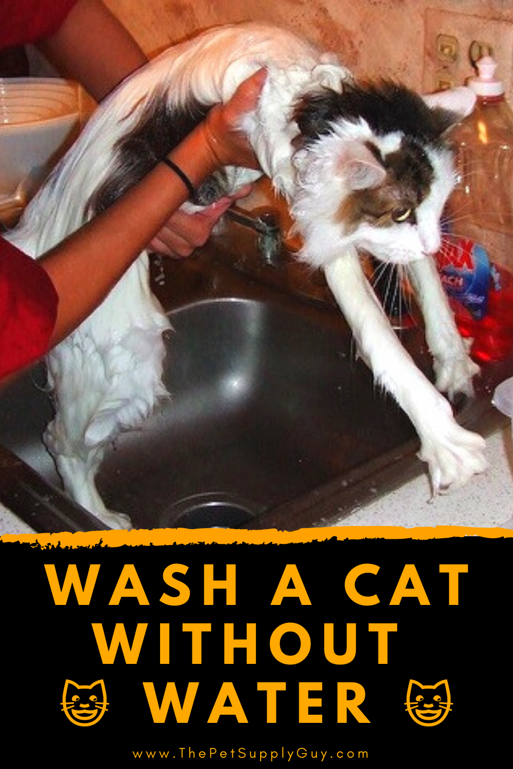 Pin On Cat Supplies Cat Care Tips