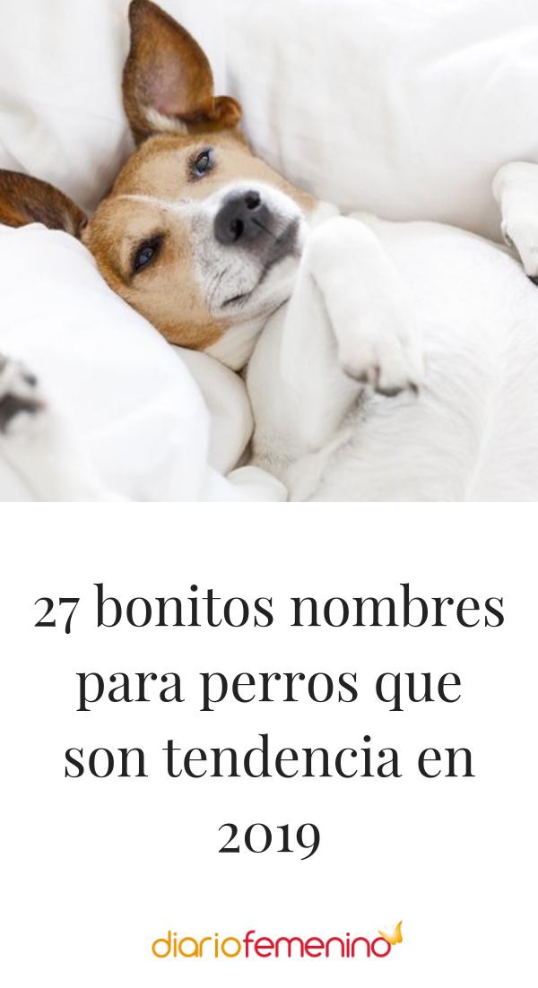 55 Ideas De Nombres Para Mascotas Nombres Para Mascotas Nombres De Perros Mascotas