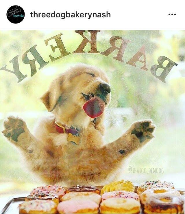 Yum 3 Dog Bakery Nashville Tn Pampered Dogs Labrador Funny Pretty Dogs