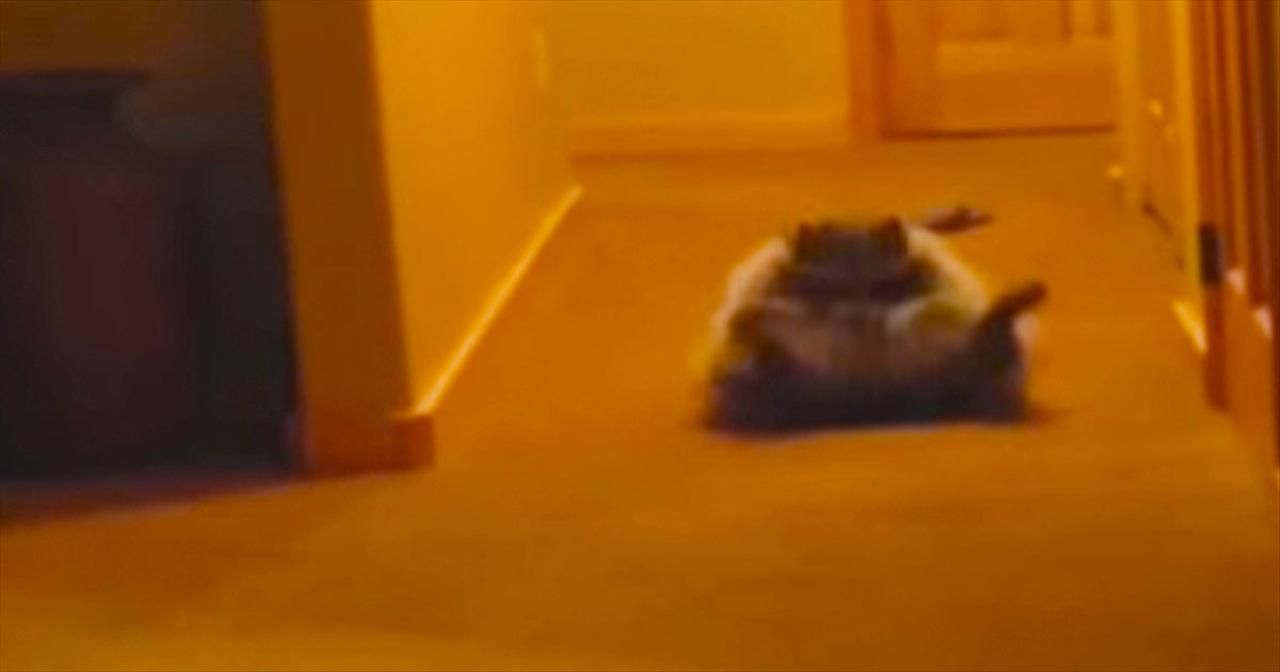 15 Seconds In You'll Be Rolling On The Floor. And You Won't Be The Only One! - Comedy Videos