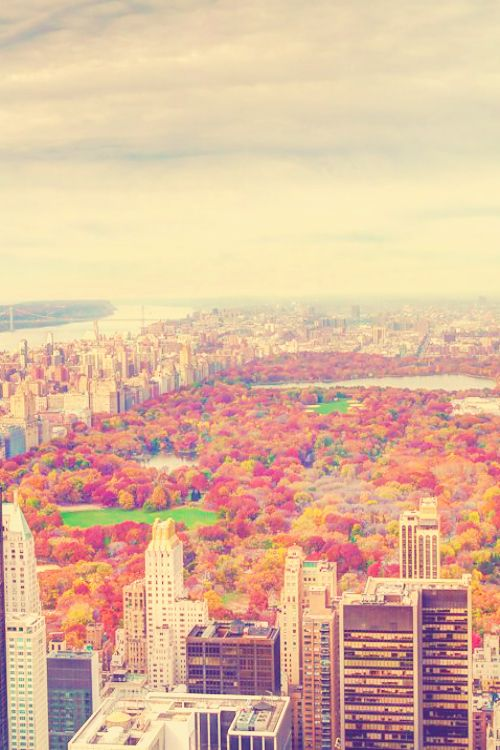 View of the charming Central Park during the Fall season. Such amazing rich colors! #travel #newyork