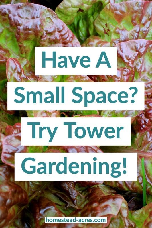 Tower Gardening For Beginners  What's The Best Way For You  – Tower garden