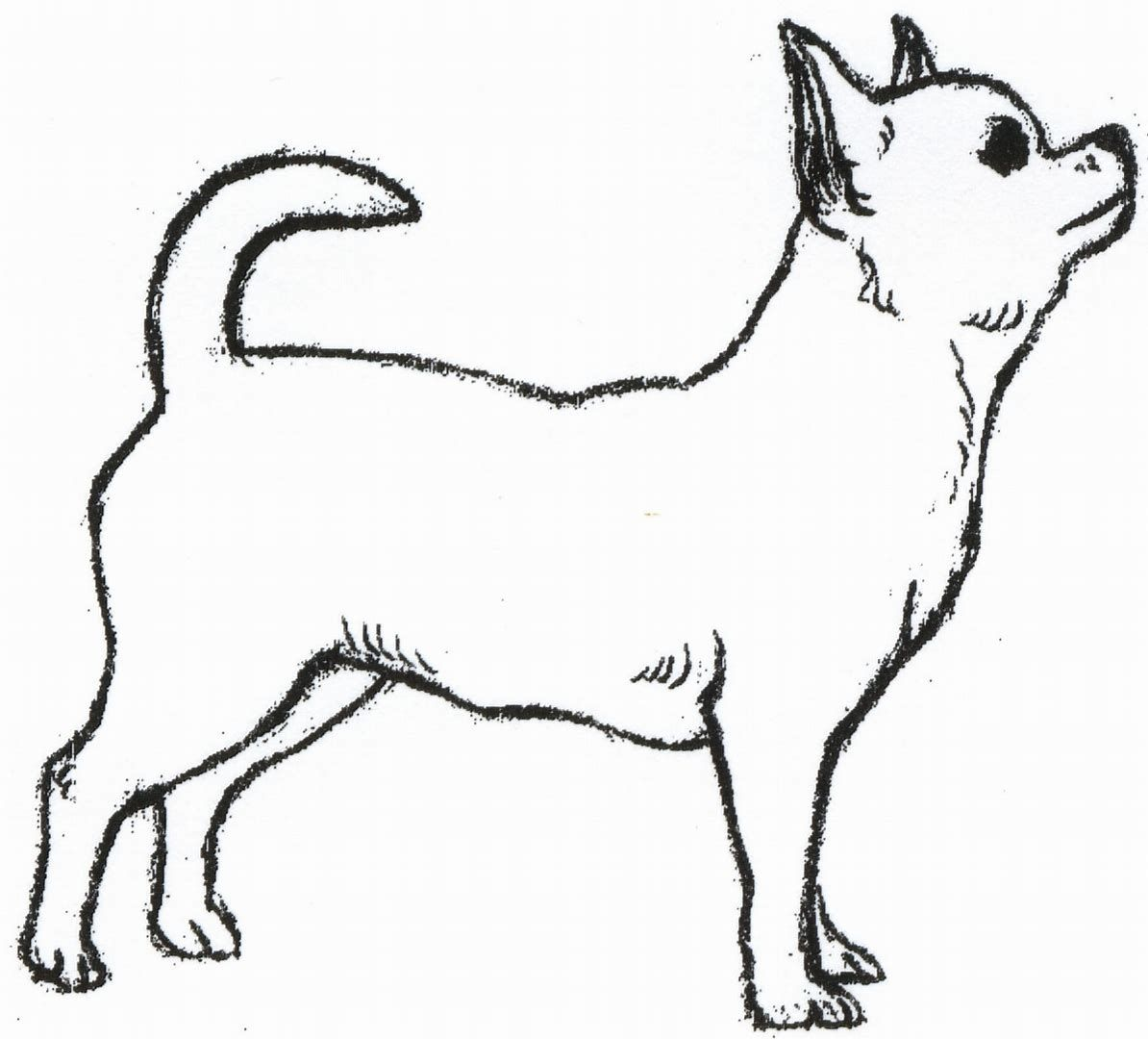 Image Result For Chihuahua Coloring Pages Cat And Dog Drawing Chihuahua Drawing Dog Drawing