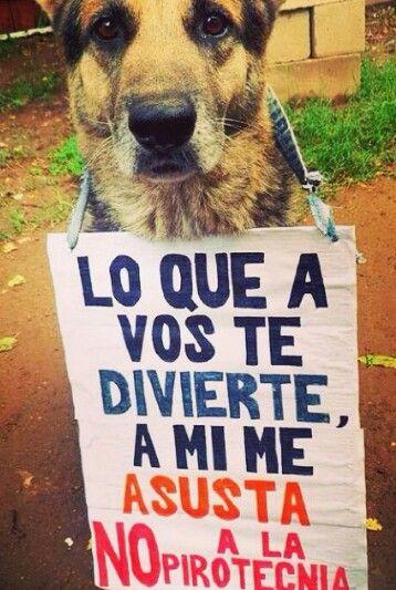 No A La Pirotecnia Amantes De Perros Perros Frases Animales Y Mascotas
