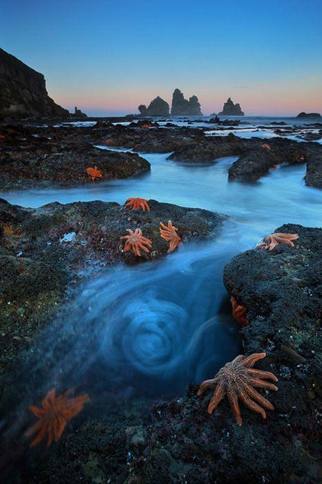 Starfish colony.  South Island, New Zealand