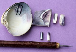 It takes thick shells to make wampum beads, and you use a narrow strip, where the shell is the thickest.