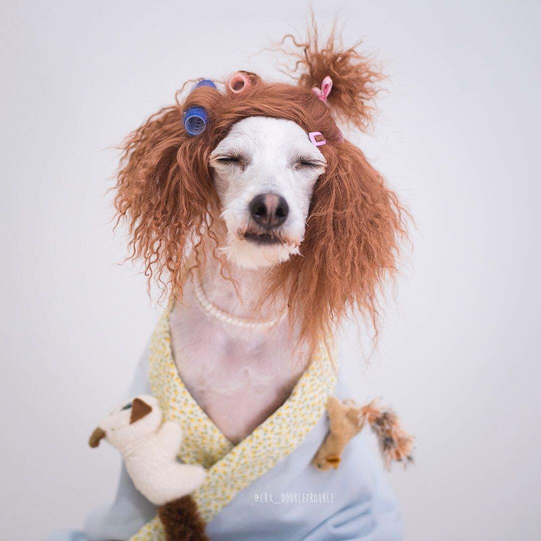 Diy Dog Costume Ideas With Images Diy Dog Costumes Crazy Cat