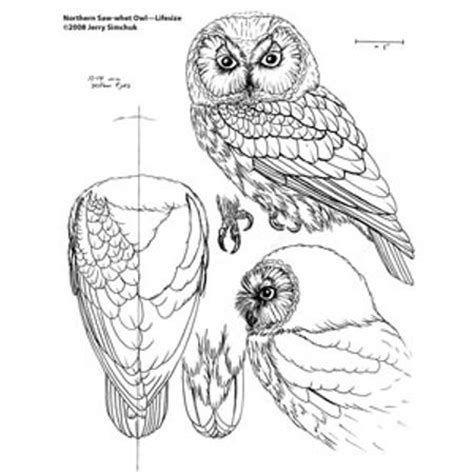 Image result for Free Bird Wood Carving Patterns Beginner