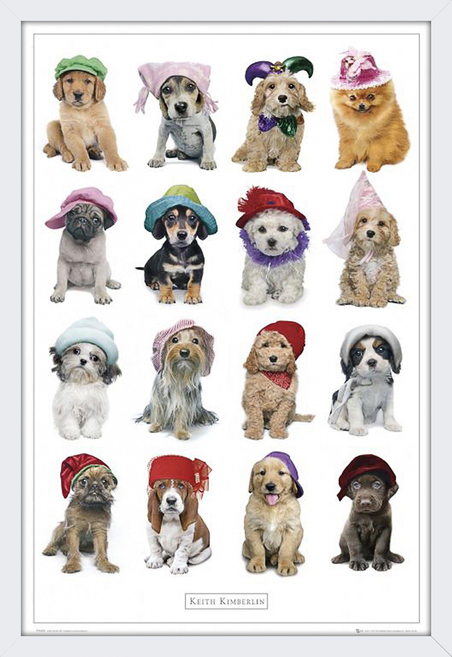 Quadro Decorativo Poster Cachorros Usando Chapéus 94x64cm - Decore Pronto 770f4e7f7c55b