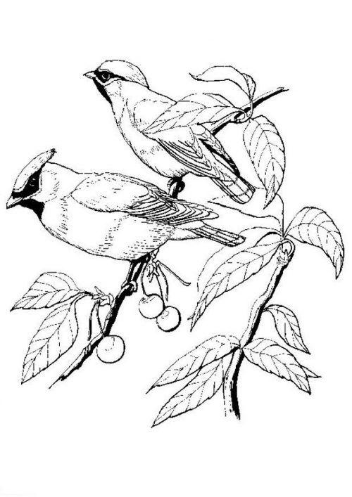 vögel ausmalbilder | kinder für malvorlagen in 2020