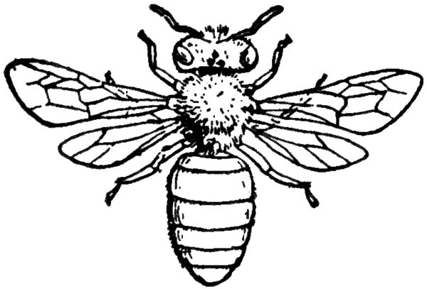 Insect Honey Bee Coloring Pages Coloring Sky Bee Coloring Pages Honey Bee Drawing Bee Drawing