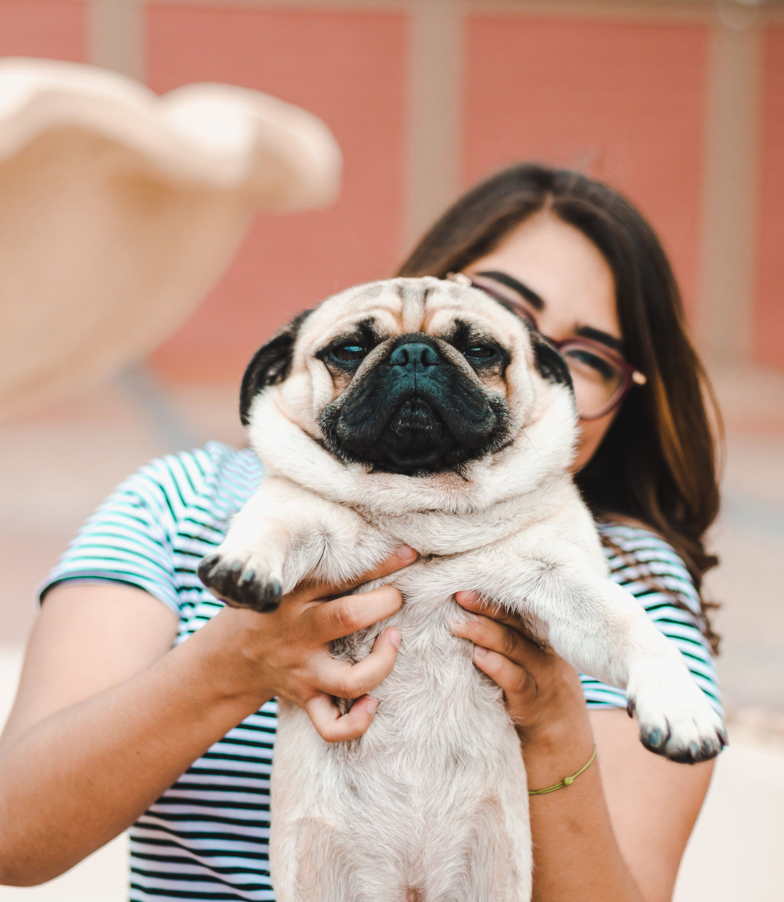 Woman Holding Pug Puppy Cute Senior Pictures Dog Photograph