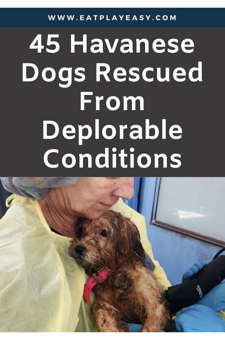 45 Havanese Dogs Rescued From Deplorable Conditions