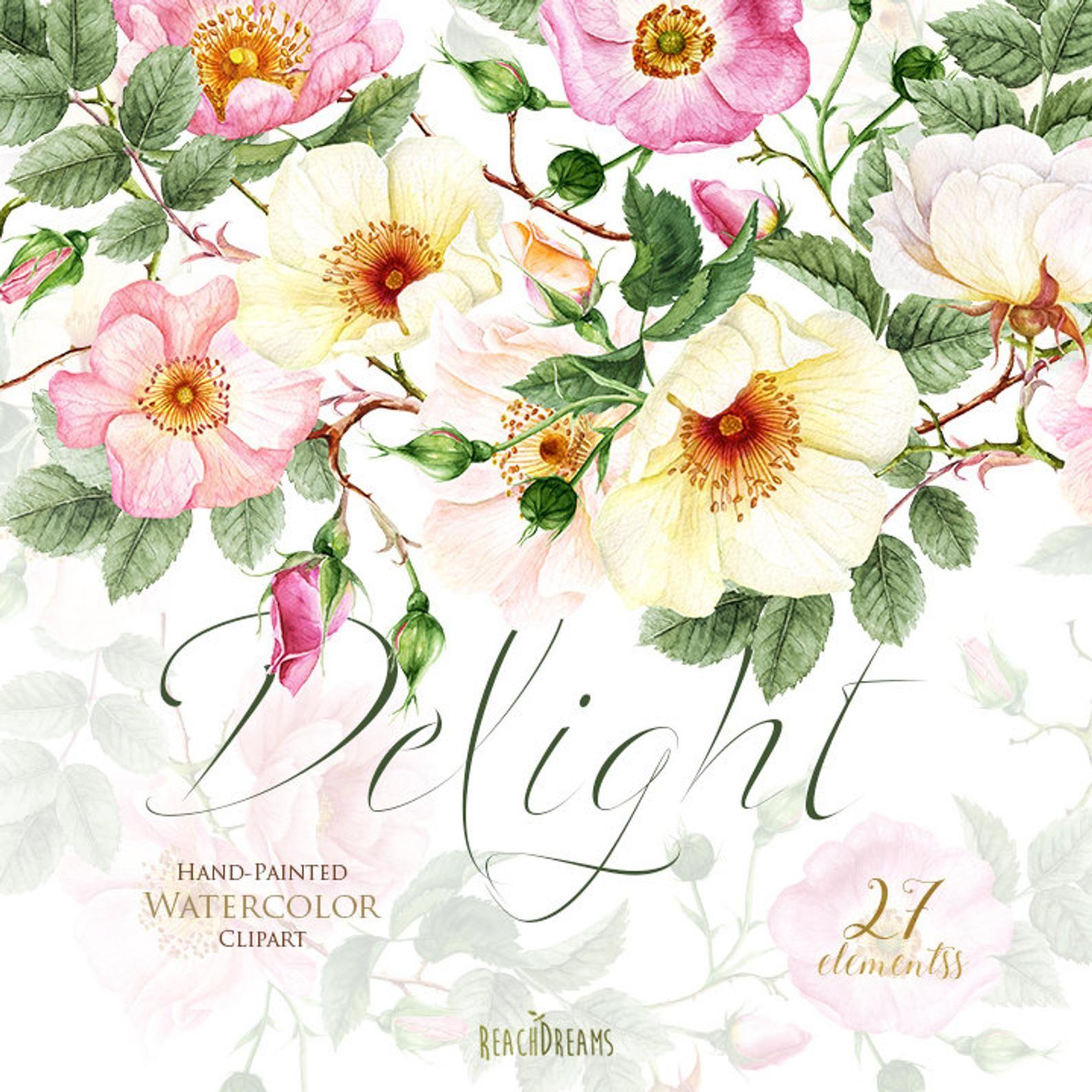 Roses Fleurs Aquarelle Elements Floraux Boho Jaune Boutons