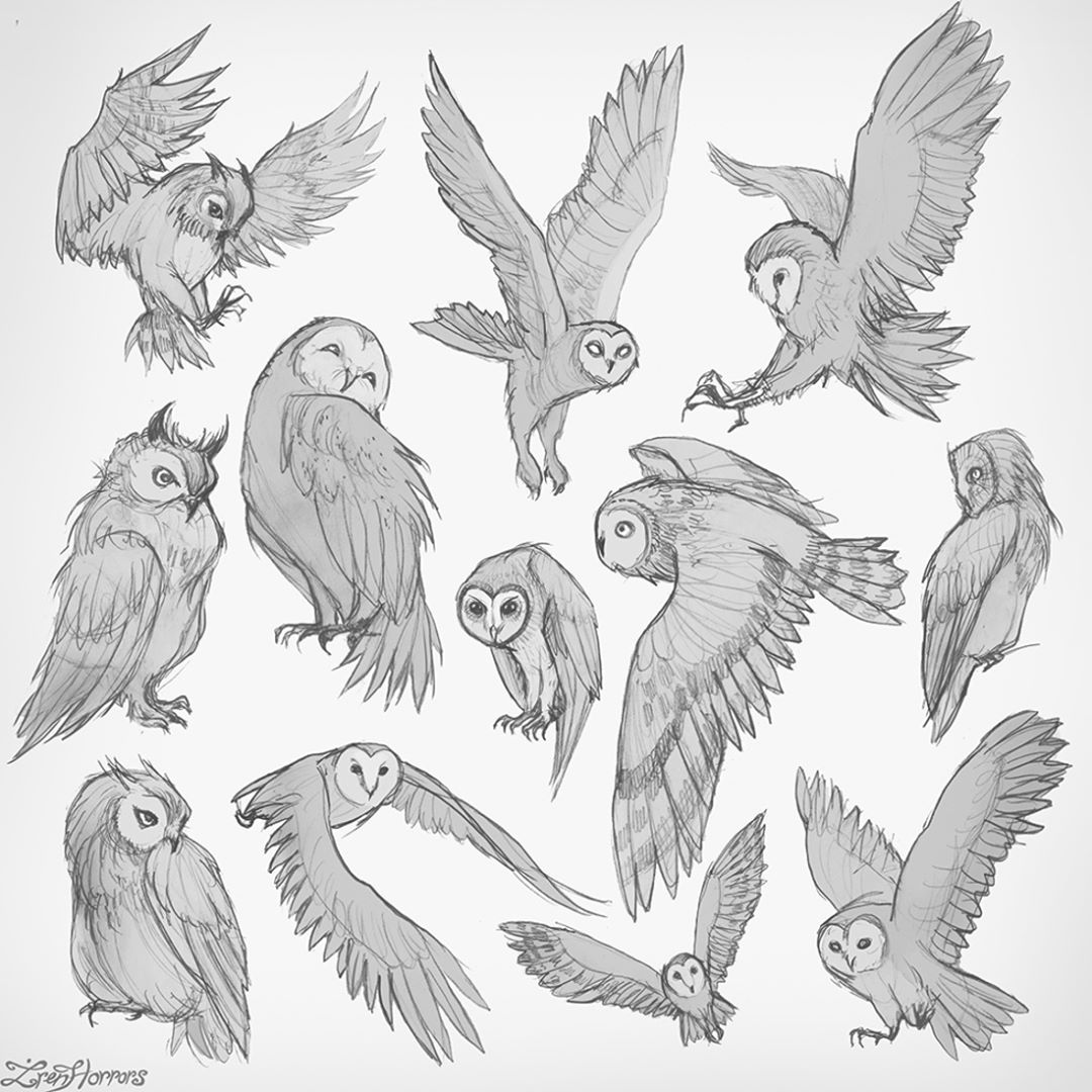 Owl's sketches for today's warm up