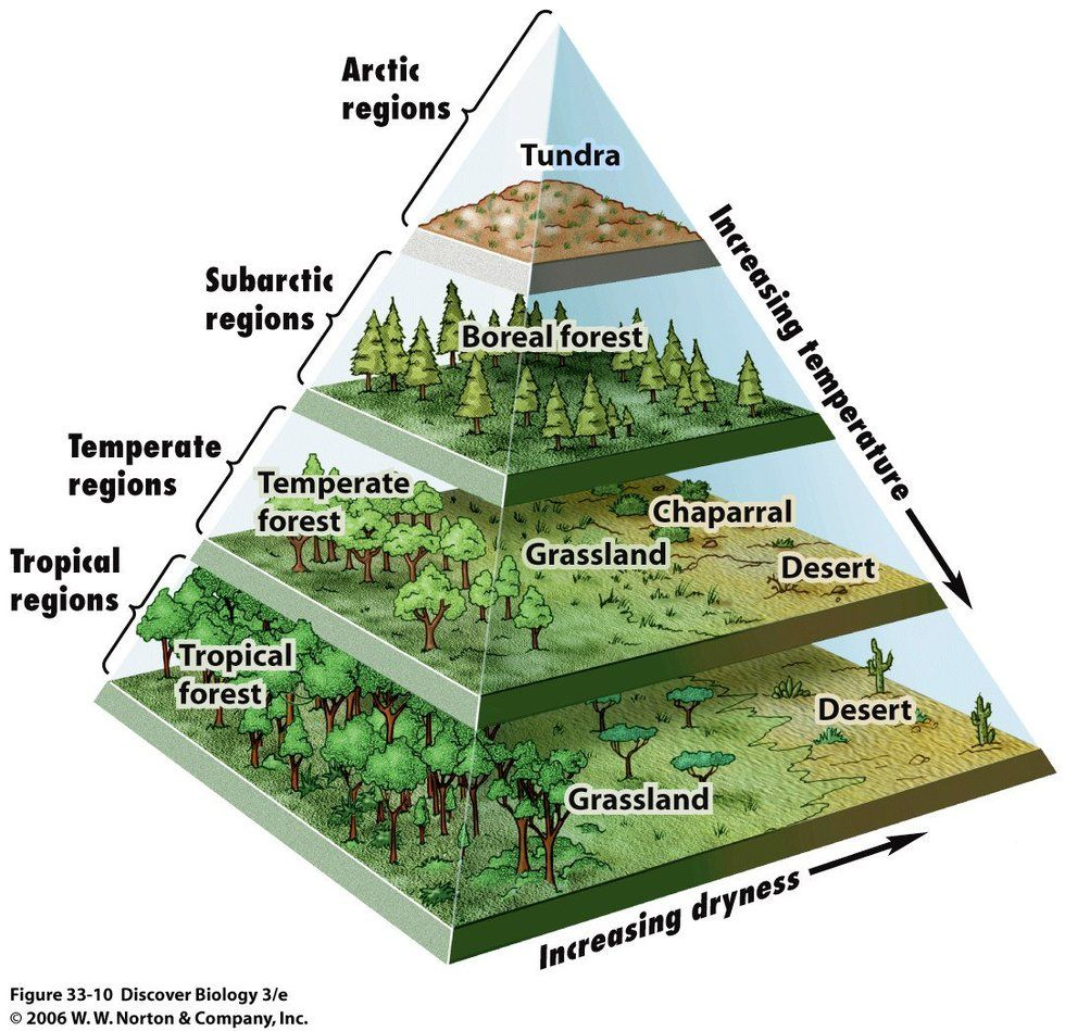 hight resolution of a pyramid map of the world s biomes big think