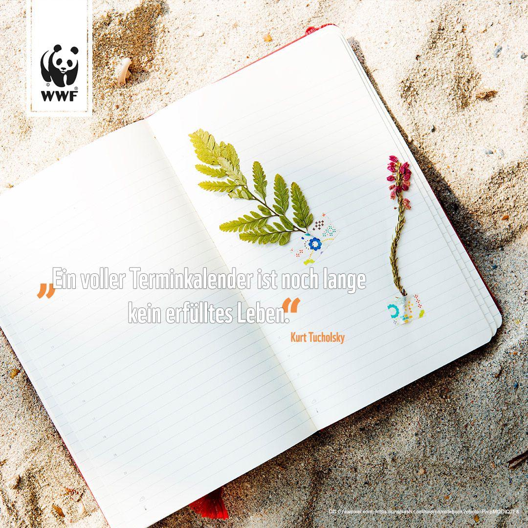 WWF Deutschland (wwf_deutschland) on Pinterest